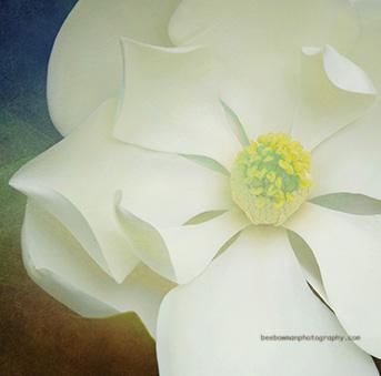 magnolia layered website